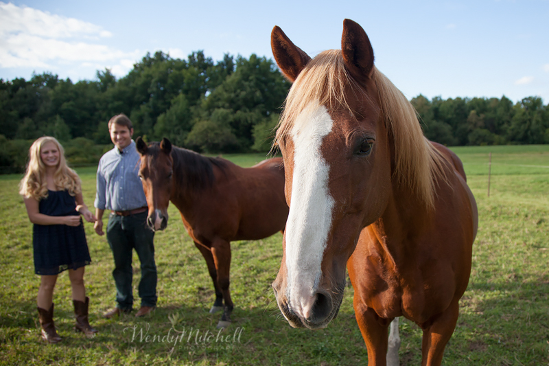 Horse coming close to the camera with engaged couple in the background | Buffalo Engagement Photography | Wendy Mitchell Photography